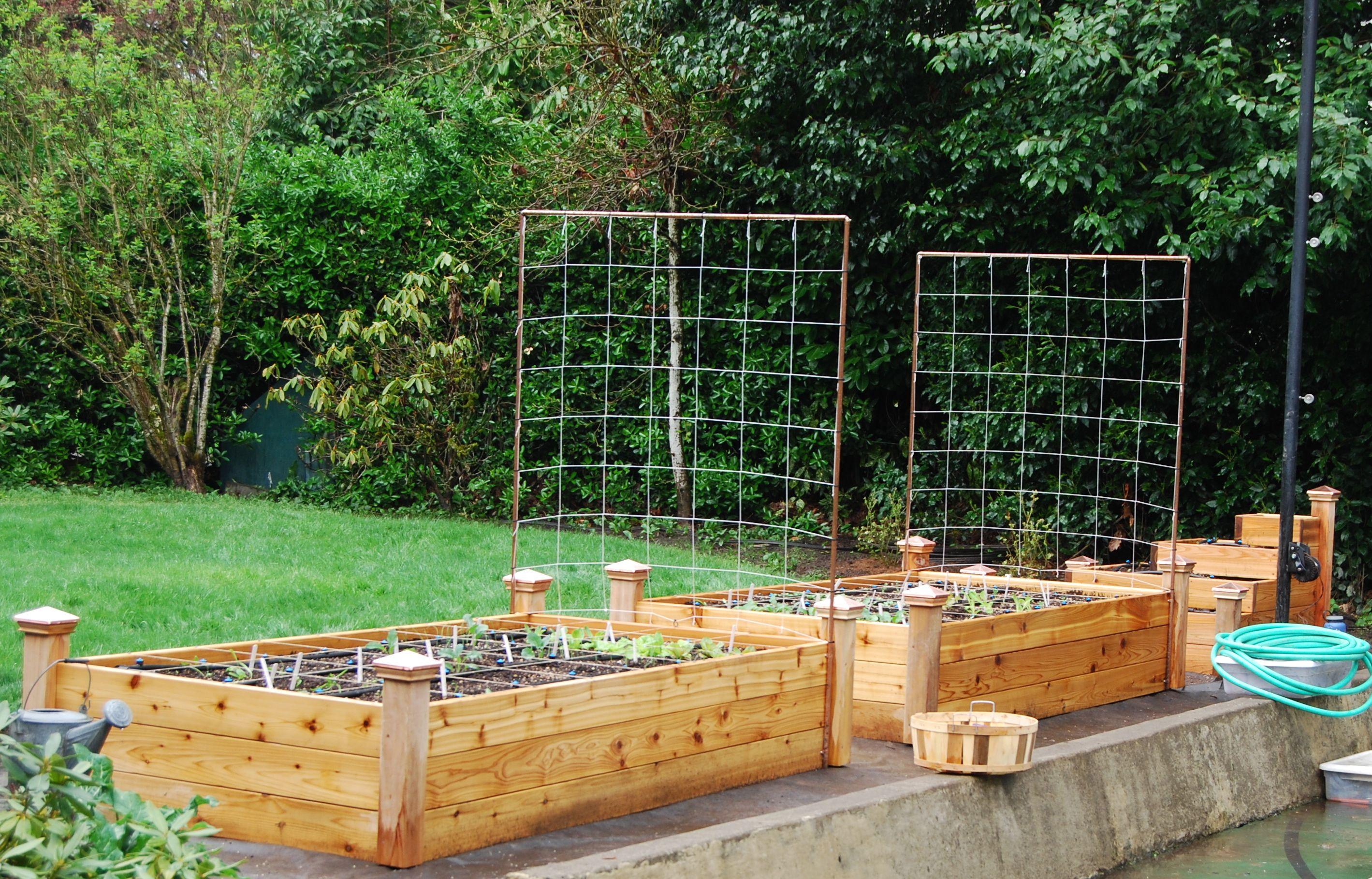 Pin by Caroline Lewis on Raised Bed Gardening Trellis