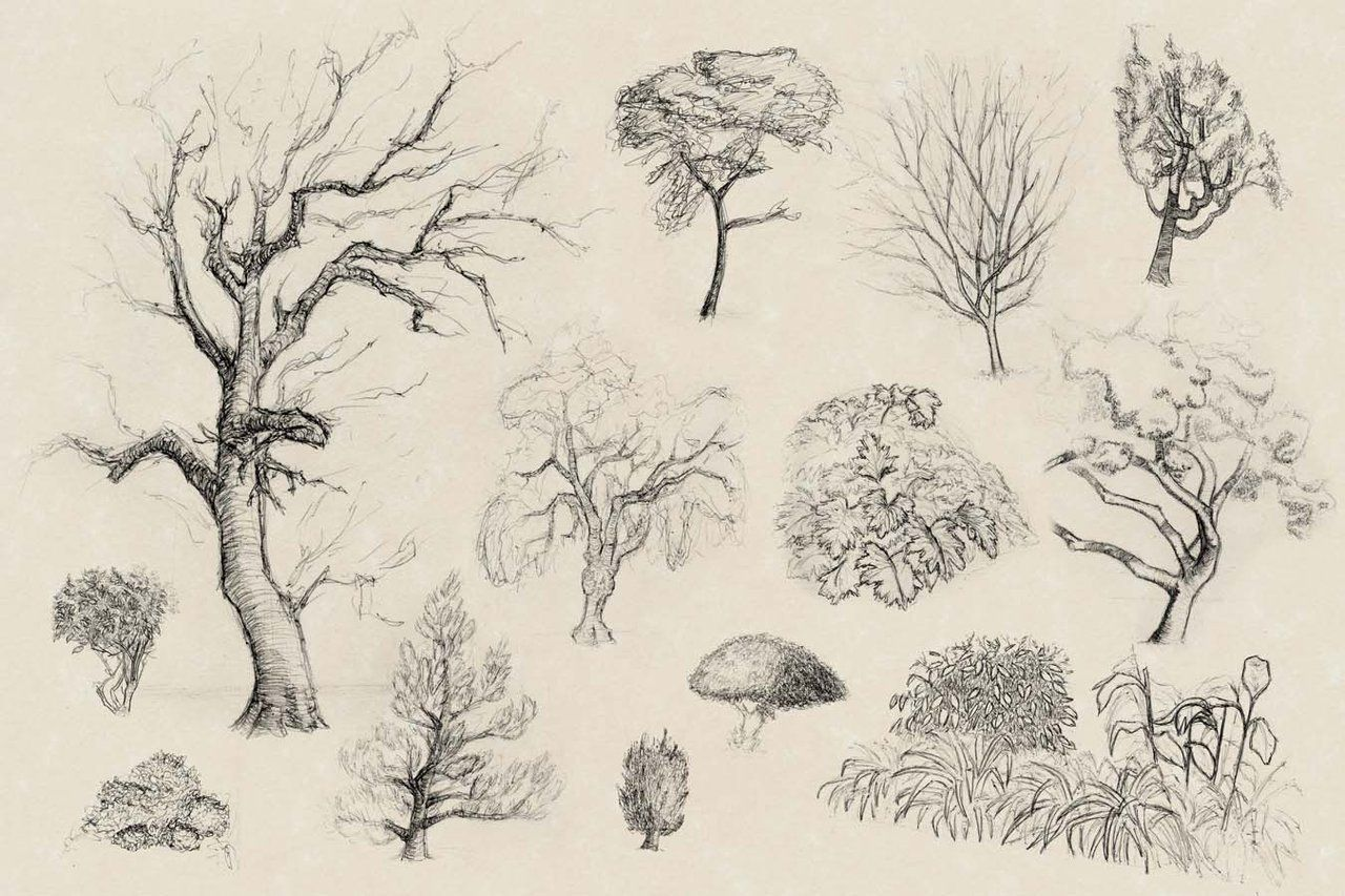 Quick Studies Of Various Trees And Bushes For An School Assignment I Put In The Parchment Paper Background For Plant Sketches Realistic Drawings Bush Drawing