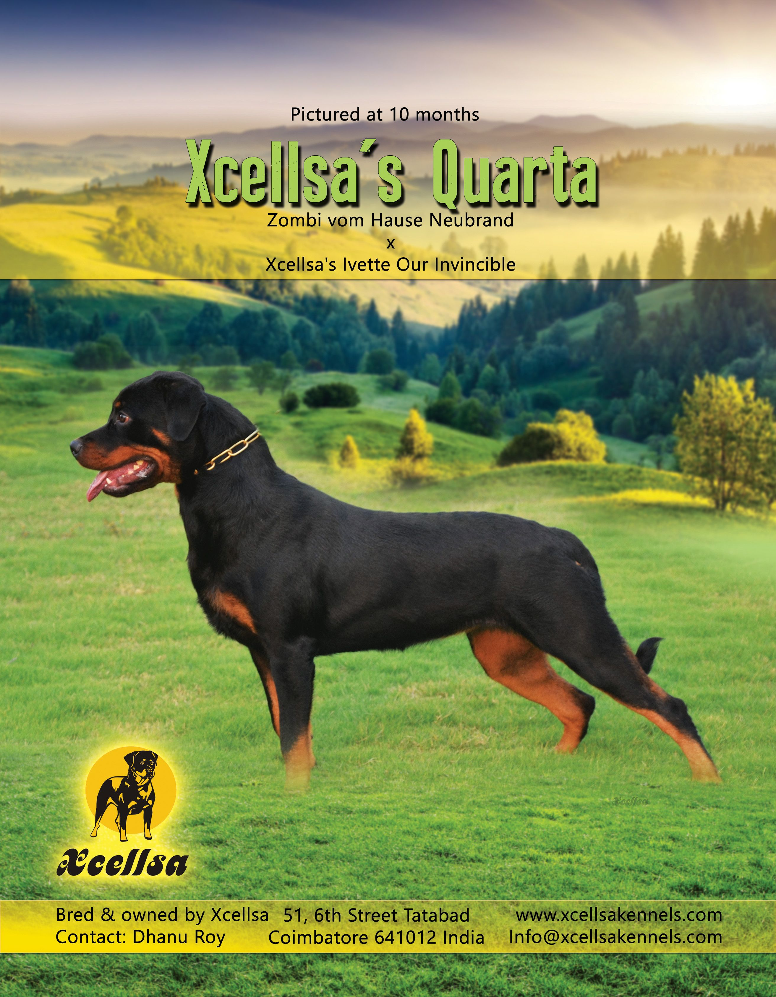 Xcellsa S Quarta Bred Owned By Xcellsa Contact Dhanu Roy India