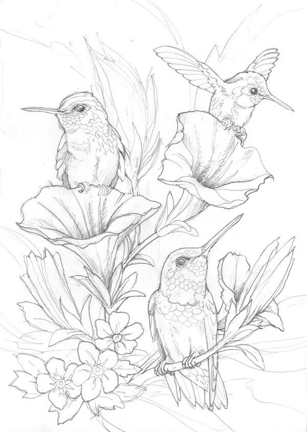 Bergsma Gallery Press::Paintings::Originals::Original Sketches::2014/Hummingbirds - Original Sketch