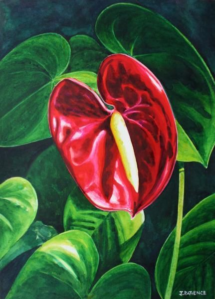 Anthurium Watercolour And Ink Julia Patience Flower Painting Acrylic Painting Flowers Floral Painting