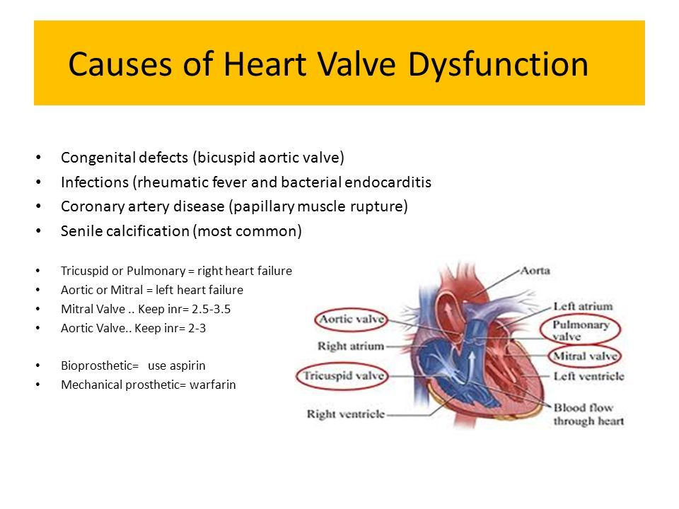 what does the bicuspid valve do