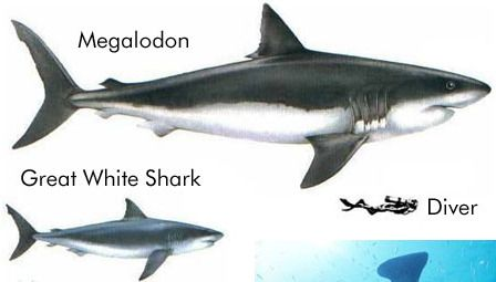 Related image | Natural History | Pinterest | Megalodon ...