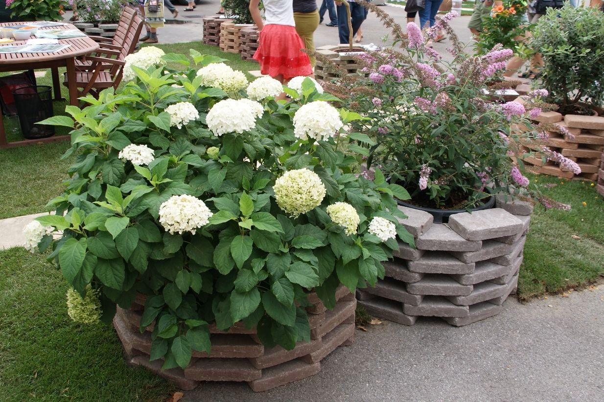 Gartenbau Tulln Garten Gartenbau Bau