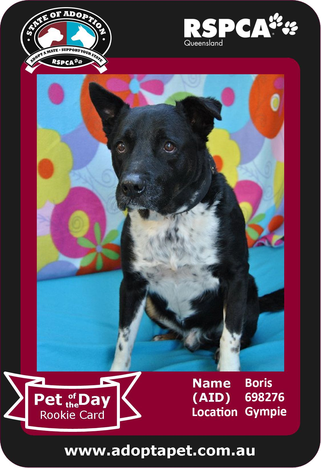 hi i'm boris. are you looking for a mature doggy with a big heart? i