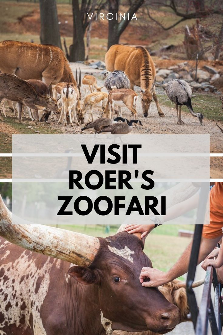 Looking for a fun outing with the kids? Check out Roer's