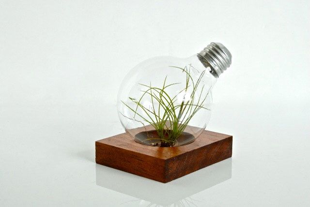 Air Plant Light Bulb Terrarium with Natural Wood Base, Wood Home Decoration, Wood Gift Ideas, Natural Wood Decoration, Wood Home Decor by eGardenStudio on Etsy https://www.etsy.com/listing/214055633/air-plant-light-bulb-terrarium-with