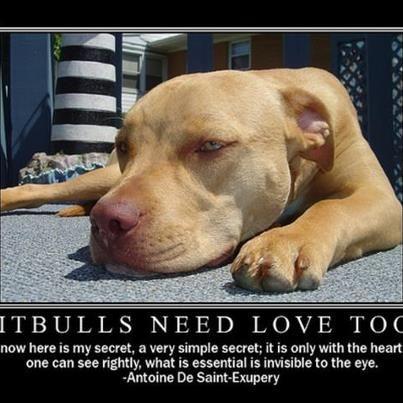 Pitbulls need love too.