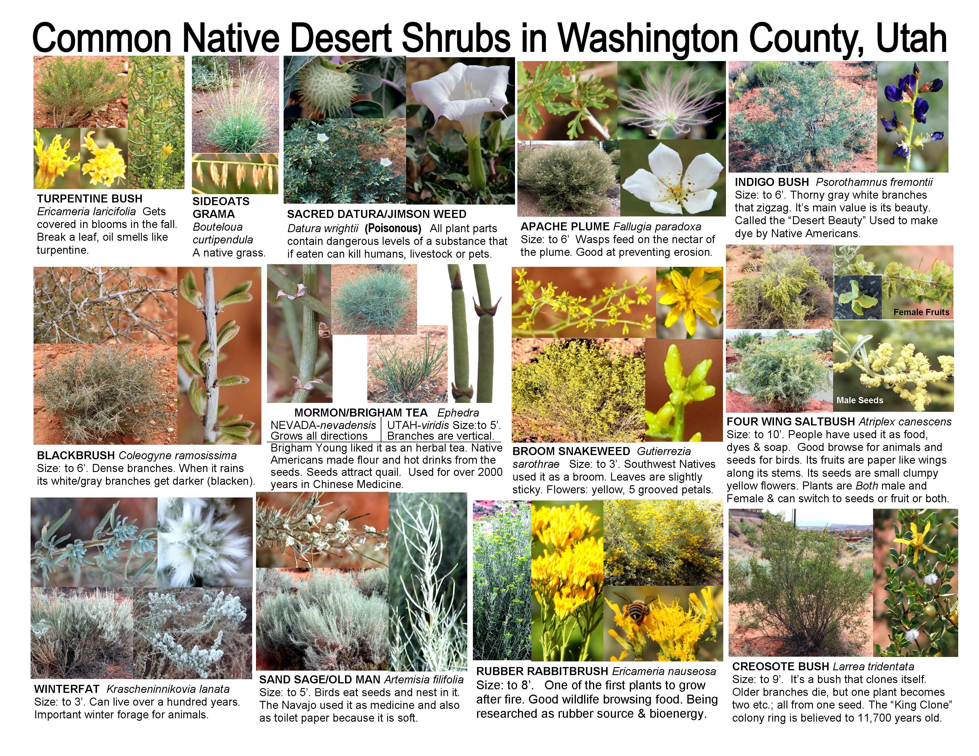 Pin On Washington County Utah Plants