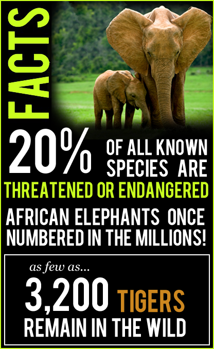 funding and support for people responsible for protecting endangered species World wildlife fund - the leading organization in wildlife conservation and endangered species learn how you can help wwf make a difference.