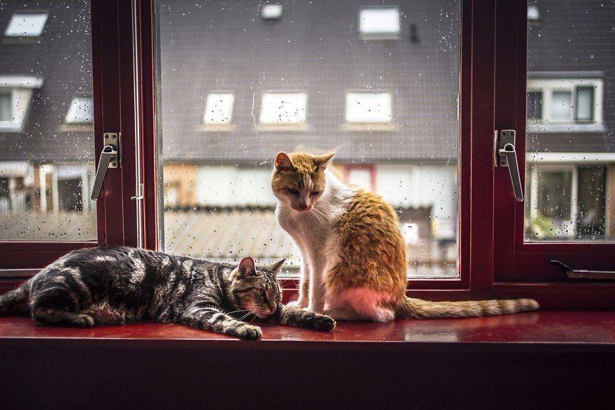 этом фото кошек смотрящих в окно устанавливали
