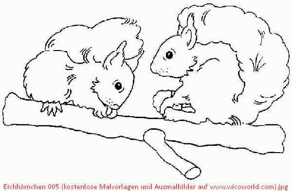 Eichhörnchen 005 (kostenlose Malvorlagen und Ausmalbilder