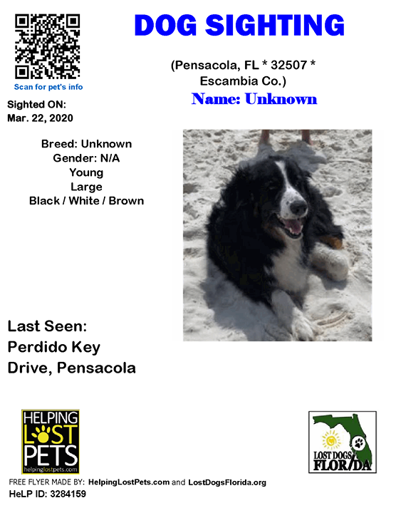 SIGHTING Is this your lost dog? Traveling with an older