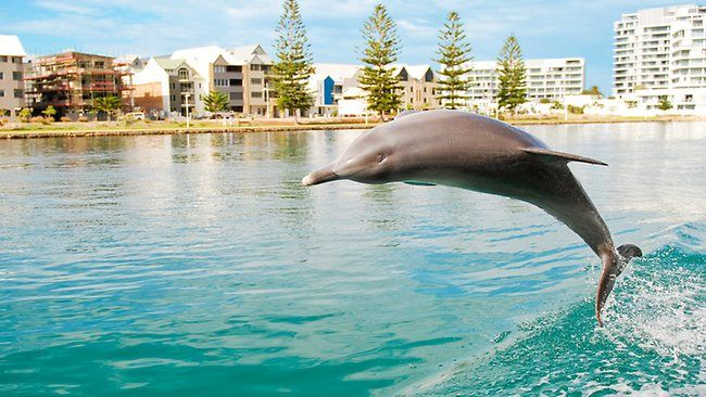 Dolphin watch in Perth...