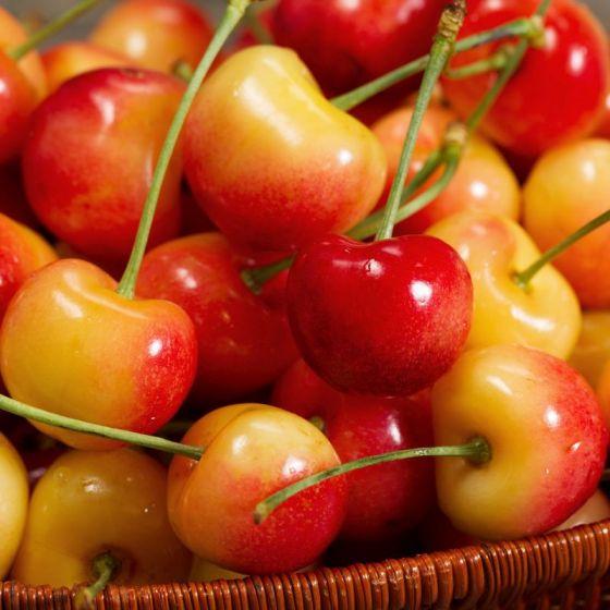 Rainier Cherry Tree Buy At Nature Hills Nursery Rainier Cherries Cherry Trees Garden Cherry Fruit Tree