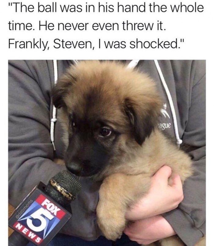 Poor Lil Pupper Funny Pics Funny Gifs Funny Videos Funny Memes