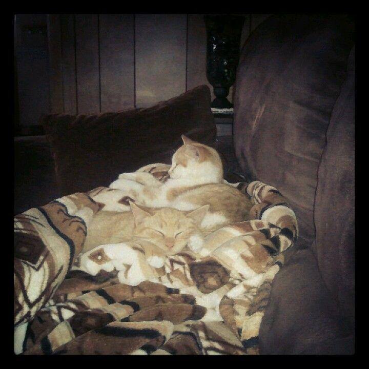 Bip & Bop my new kitties