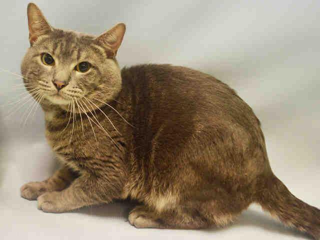 Michael A1059428 Cat Adoption Pet Adoption Animal Rescue