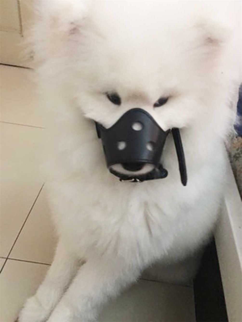Dog Muzzle Leather For No Barking Biting Chewing Adjustable Allow Drinking Size Xs S M L Xl Fit Extra Small Medium And Extra L Dog Muzzle Pet Accessories Dogs