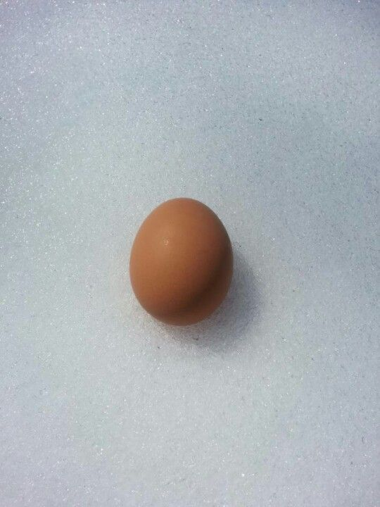 A fresh egg from one of our customers.
