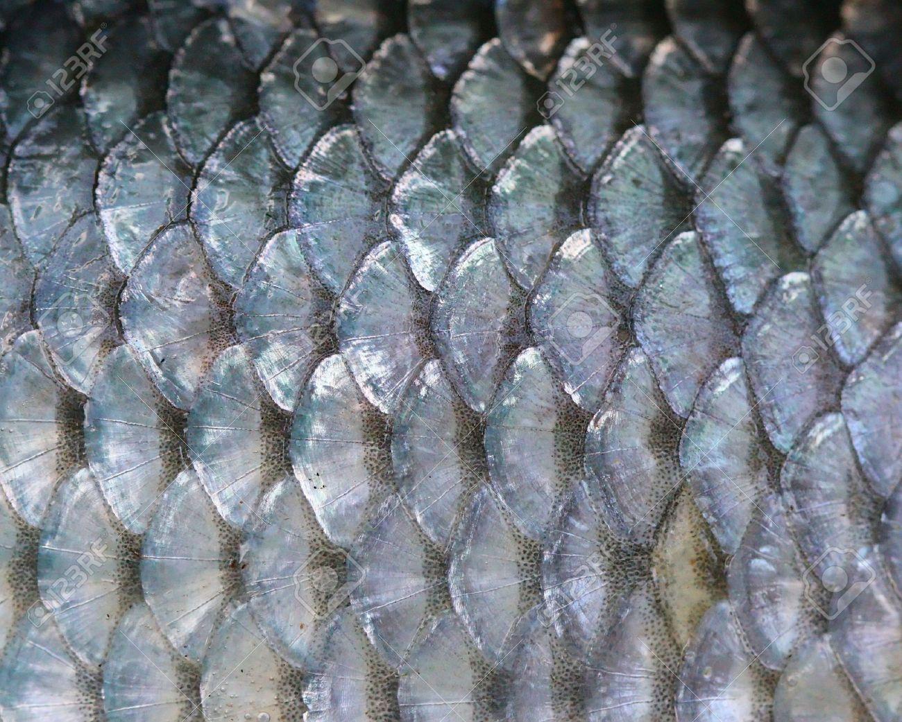 просто кожа рыб картинки могут быть цветным
