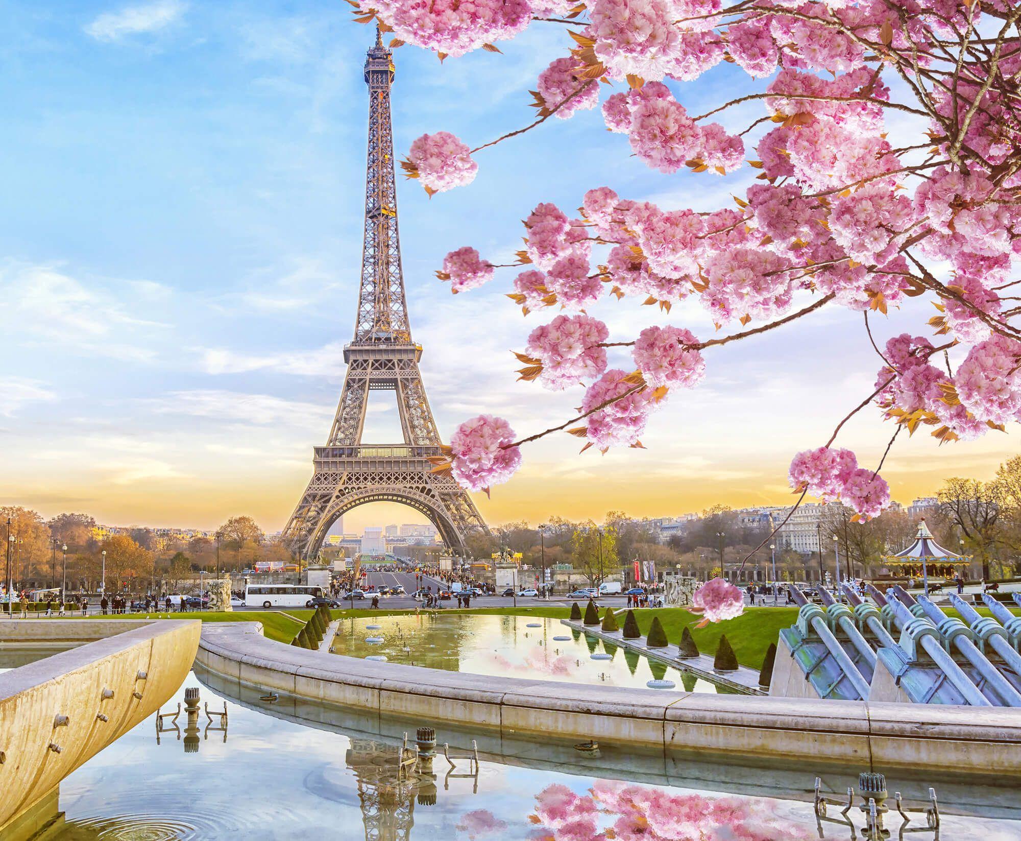 Sasi Wallpaper Eiffel Tower Cherry Blossobum Eiffel Tower Tourist Trap Eiffel Tower At Night