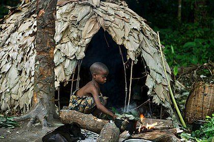 Okapi Wildlife Reserve Essay Sample
