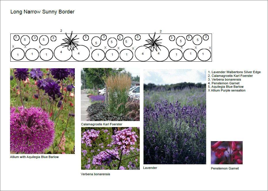 Narrow Border Plant Design Colorful Garden Narrow Garden