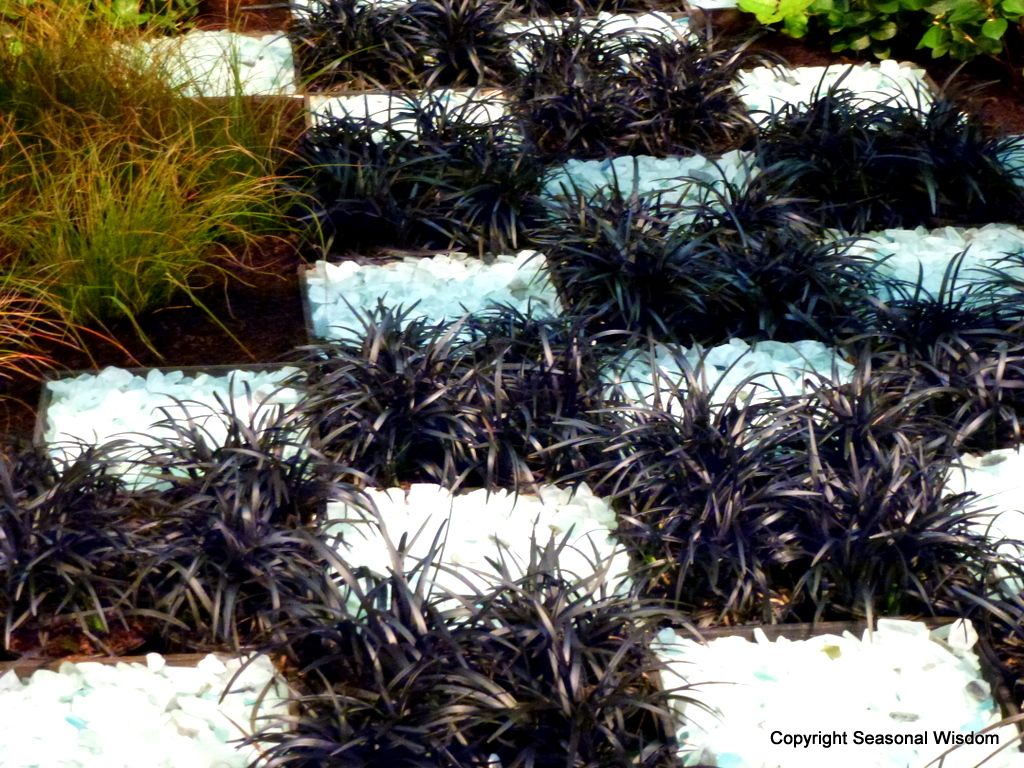 How to plant ground cover between pavers - Plant Black Mondo Grass In Between Pavers Or Squares Of White Gravel For A Chessboard Look