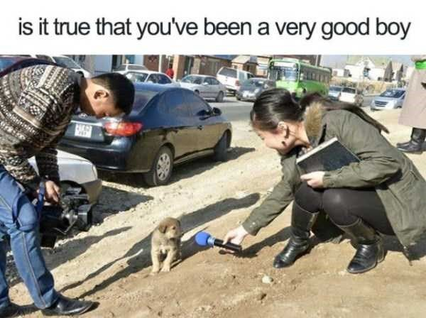 The Best News Interview Ever Cute Funny Animals Animal Memes Cute Animals
