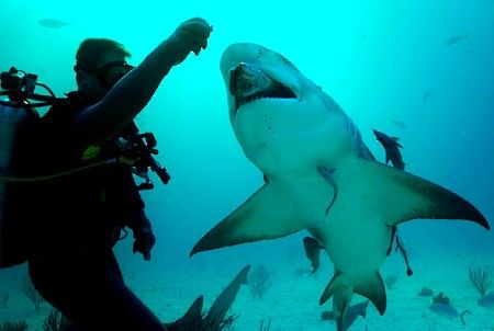 Do you like biology, animals and the ocean? Then you are right here - marine biologist job description