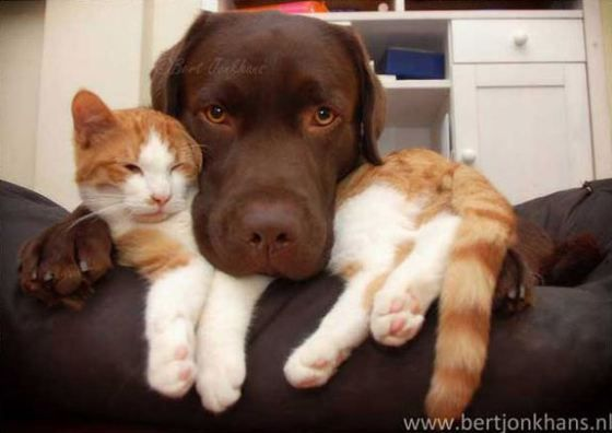 Dogs Cats Living Together Mass Hysteria Cute Puppies And Kittens Cute Animals Dog Cat