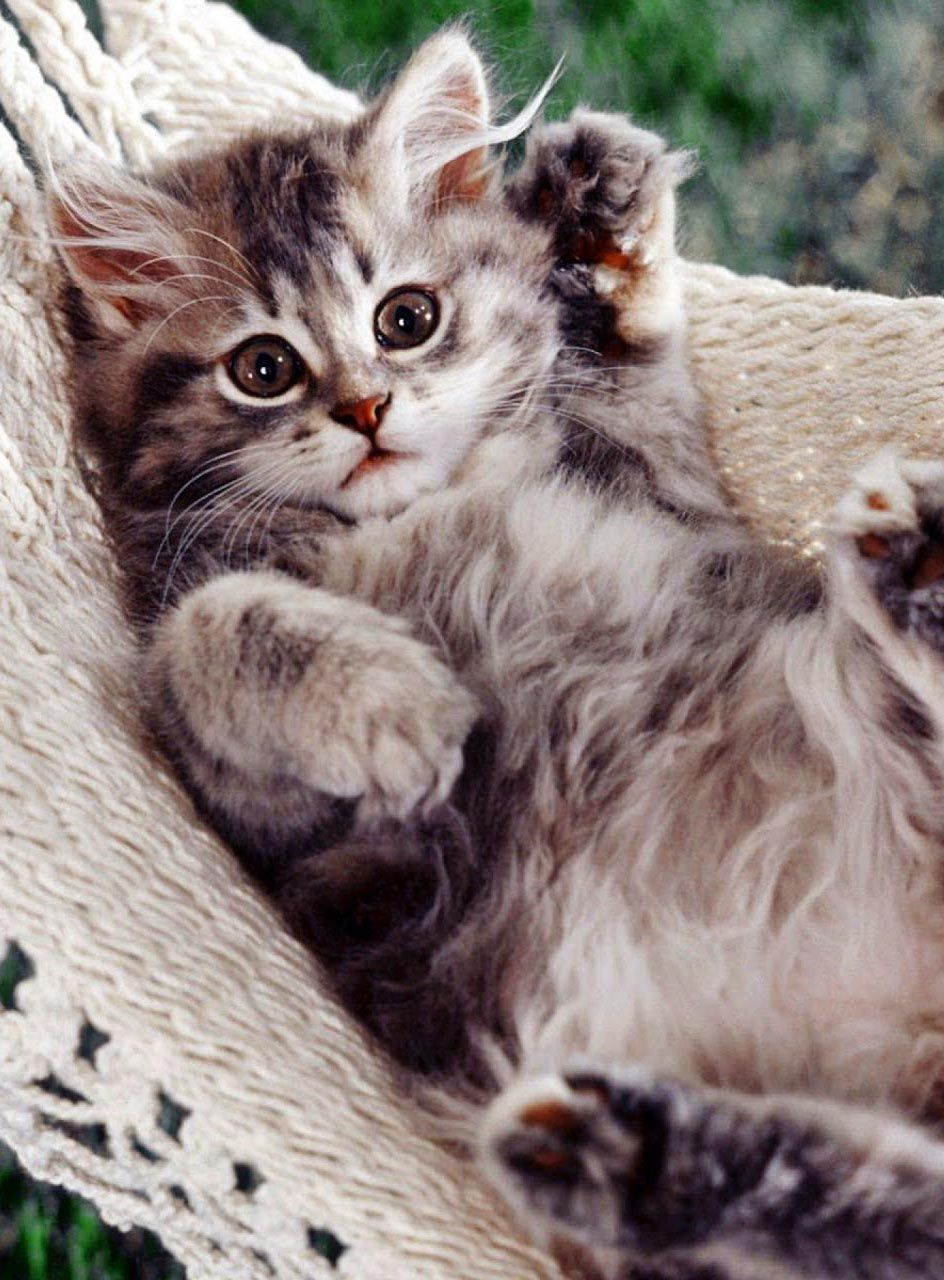 Top 30 Cute Cat All Time