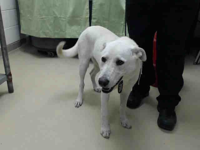 LILAH   HOUSTON, TX   PetHarbor com: Animal Shelter adopt a pet