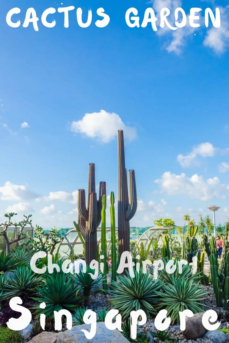 Things to do Changi Airport Singapore Cactus Garden