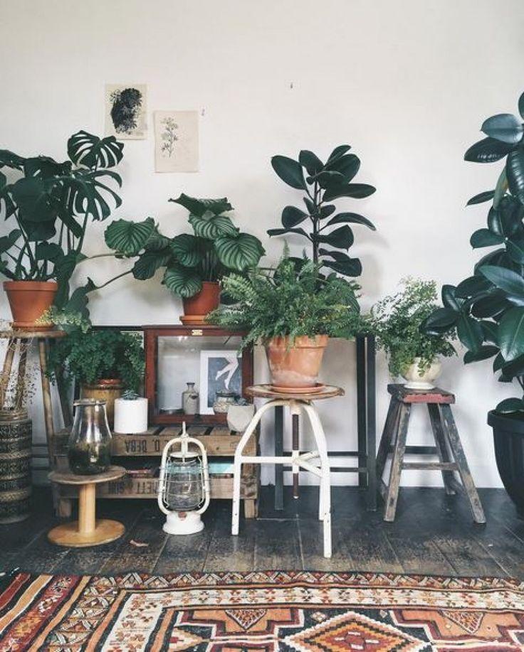 Welche Pflanze für welches Zimmer? 7 geniale (und