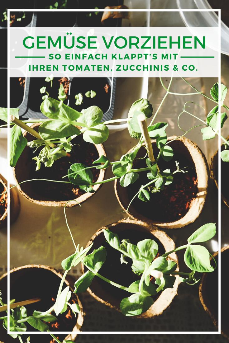 Gemüse anbauen: Gemüse vorziehen - So klappt's mit Ihren Tomaten, Zucchinis & Co.