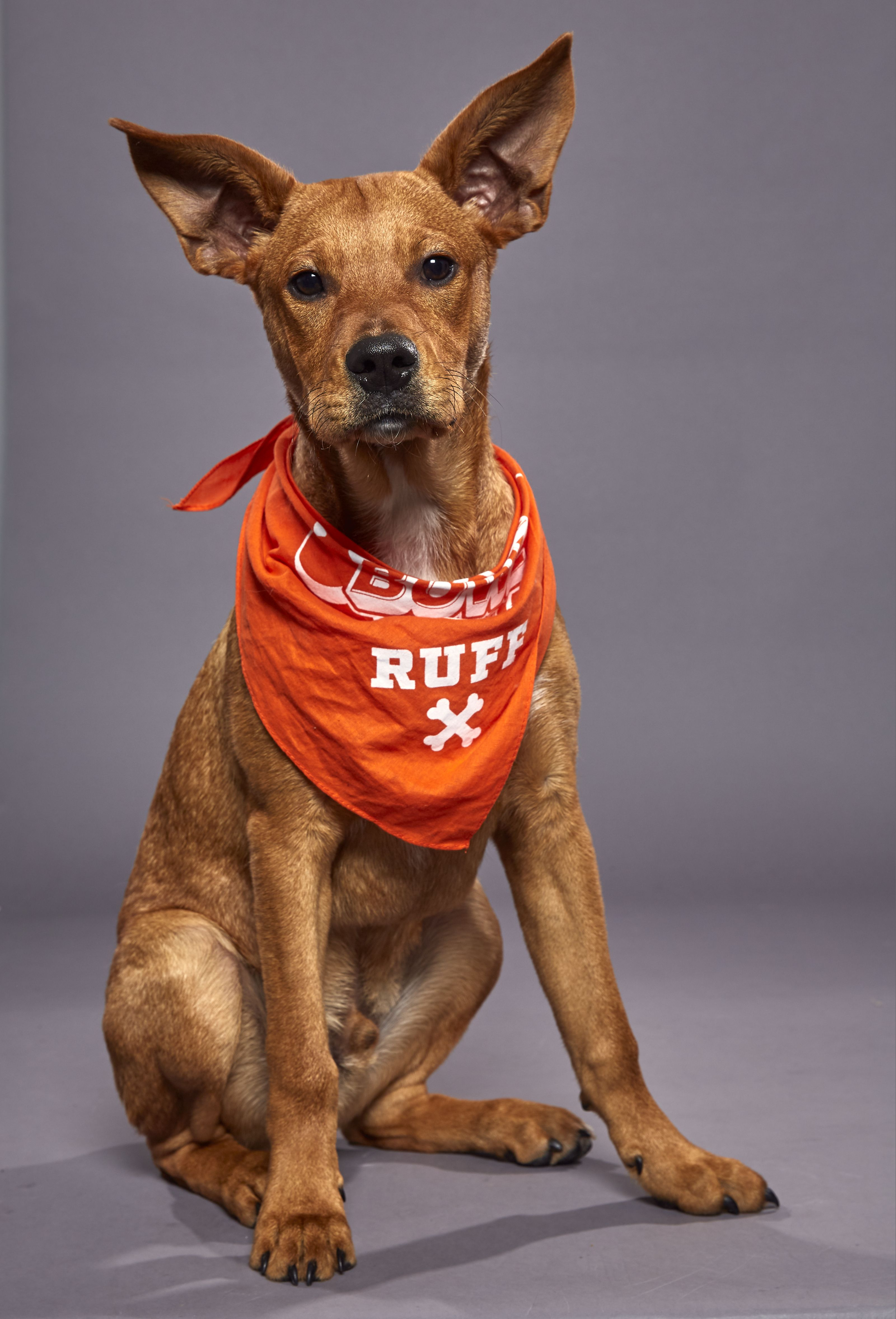 Michigan shelter pup to compete in puppy bowl xvi puppy