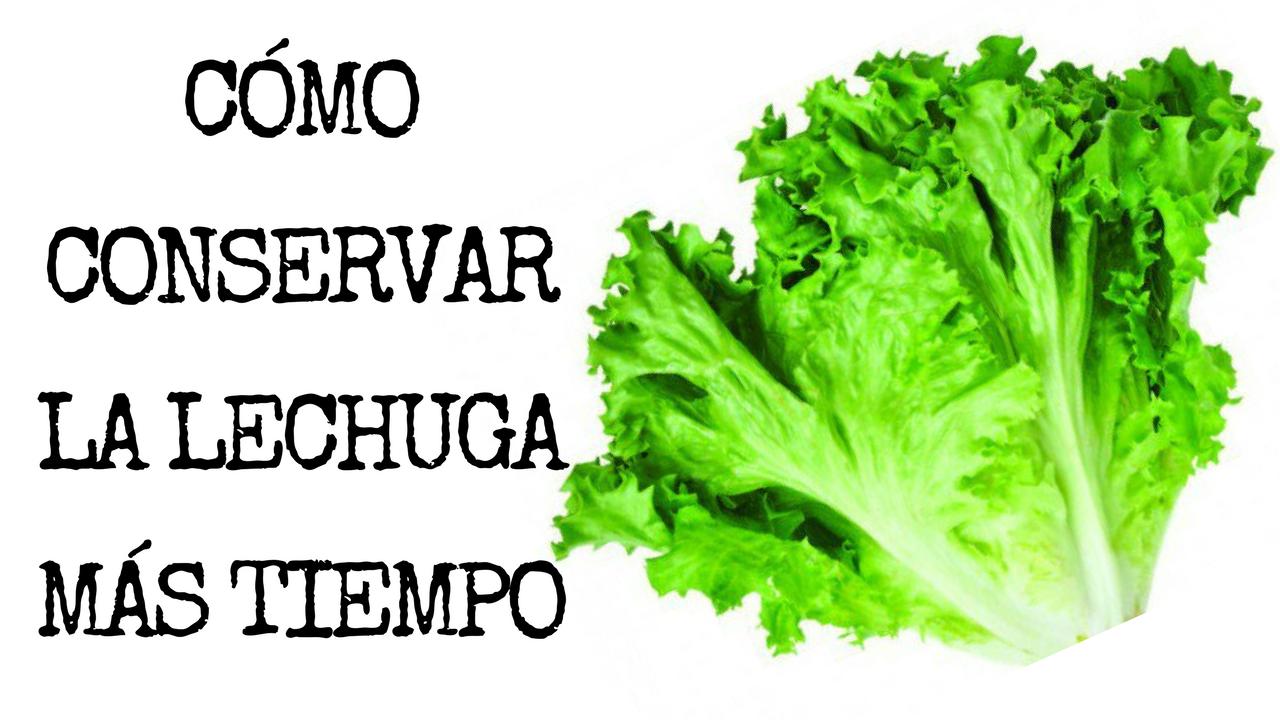 Cómo Conservar La Lechuga Fresca Más Tiempo En Solo 5 Pasos 5 Como Conservar En Fre Como Conservar La Lechuga Lechuga Conservar Lechuga