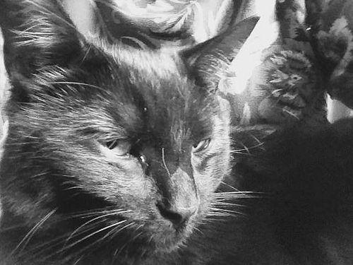 my cat maffia Sesam, he looks like a killer