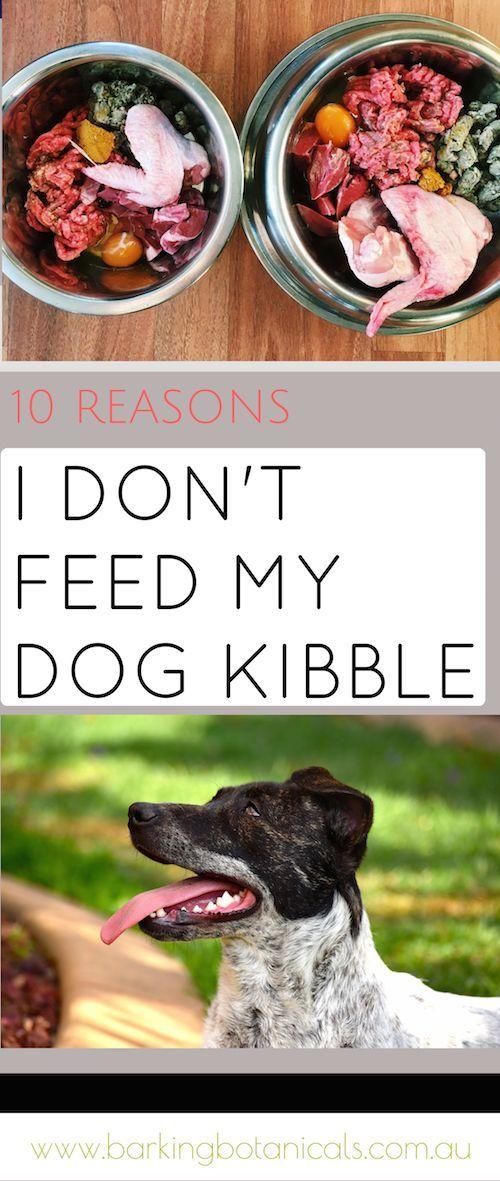 10 Reasons I Don T Feed My Dog Kibble Homemade Dog Food Raw