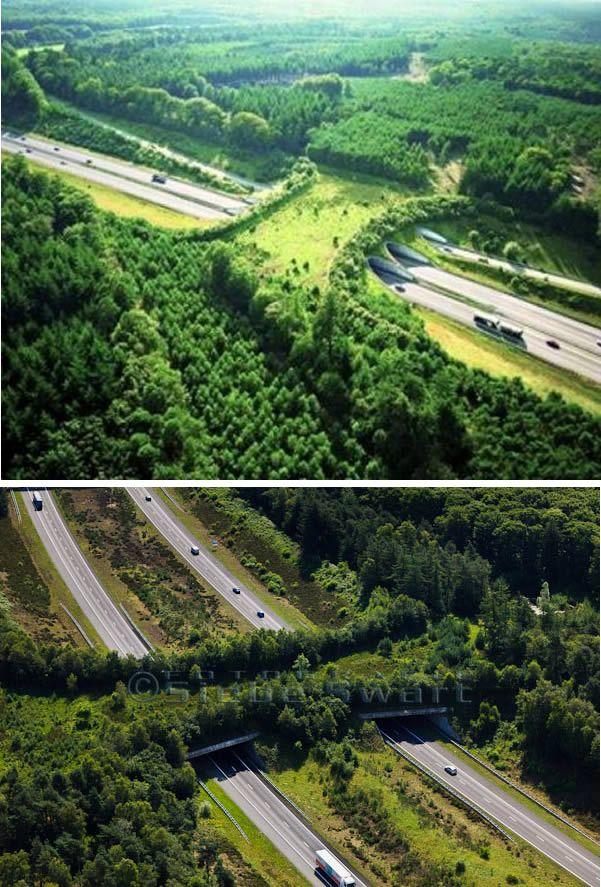 10 Cool Wildlife Crossings | Bridge design, Wildlife ...