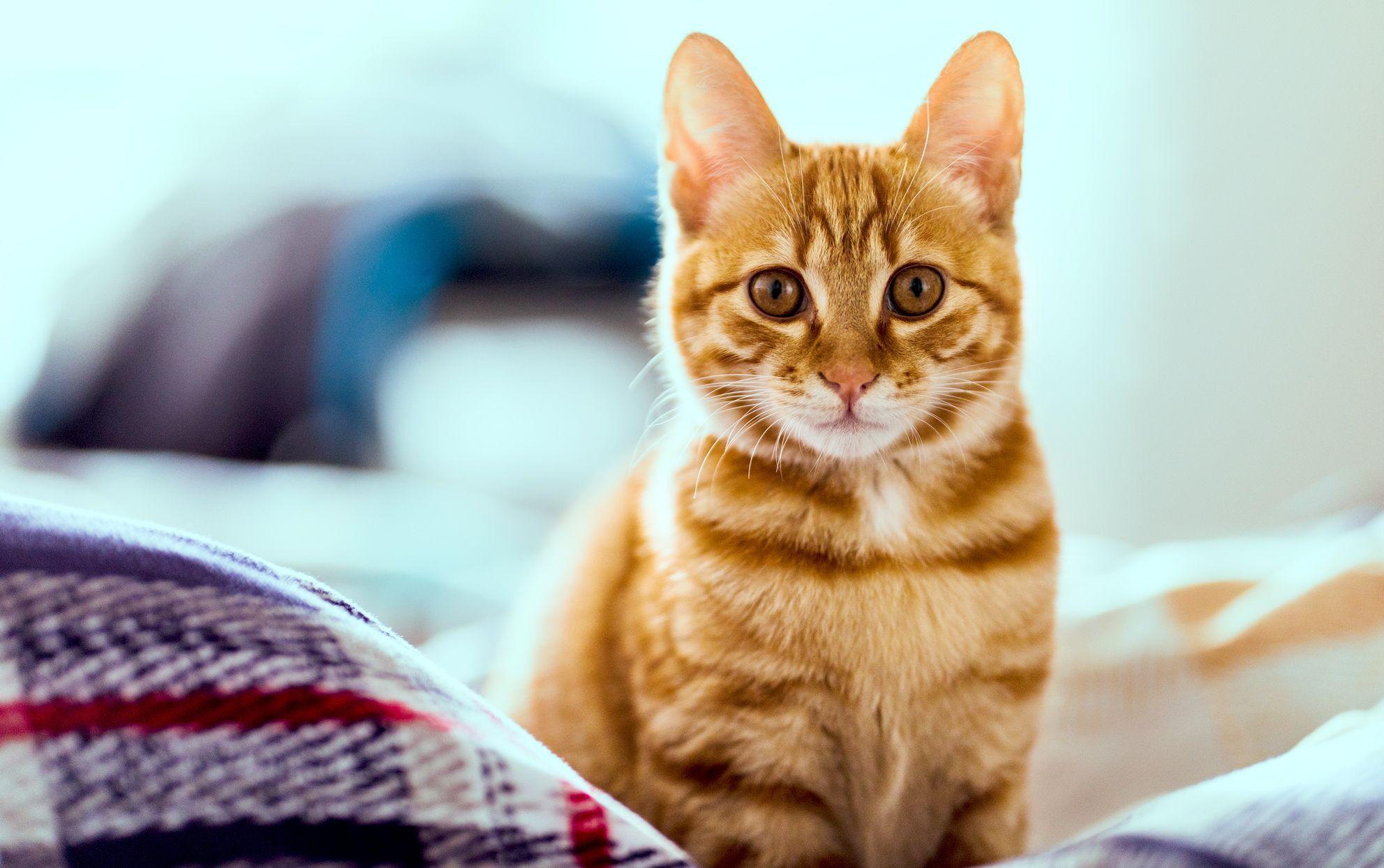50 Orange Cat Names as Vibrant as Your Feline's