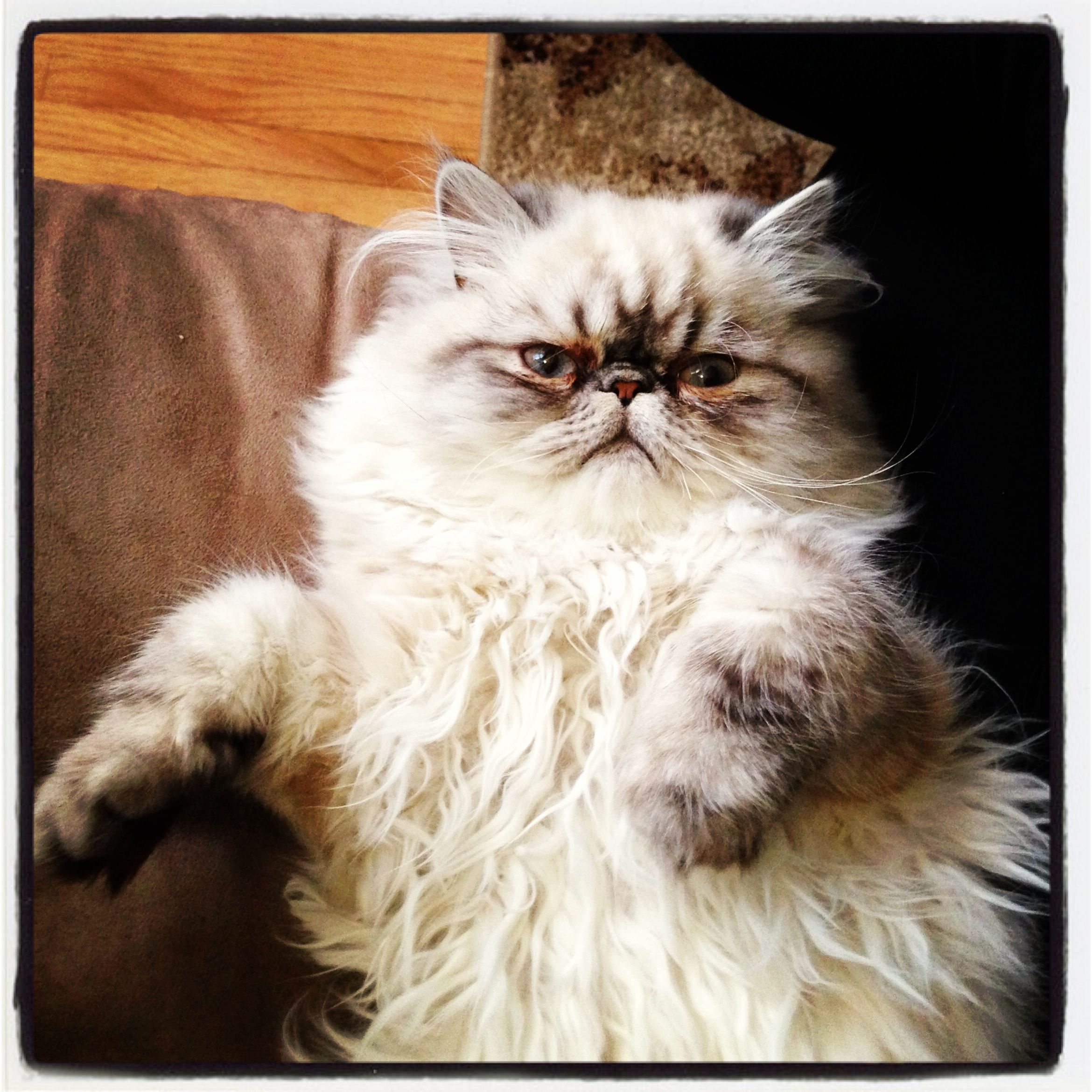 Video How To Prevent Your Cat From Spraying Cat Cats Persian Cat Cats Grumpy Cat