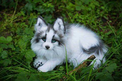 canadian marble fox animal pics pinterest foxes marbles and