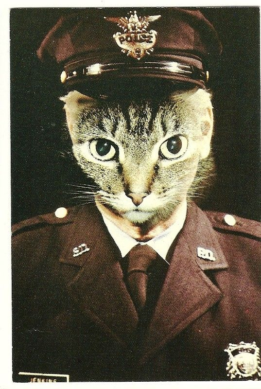 1982 Alfred Gescheidt Cat Postcard American Cat By Theidconnection