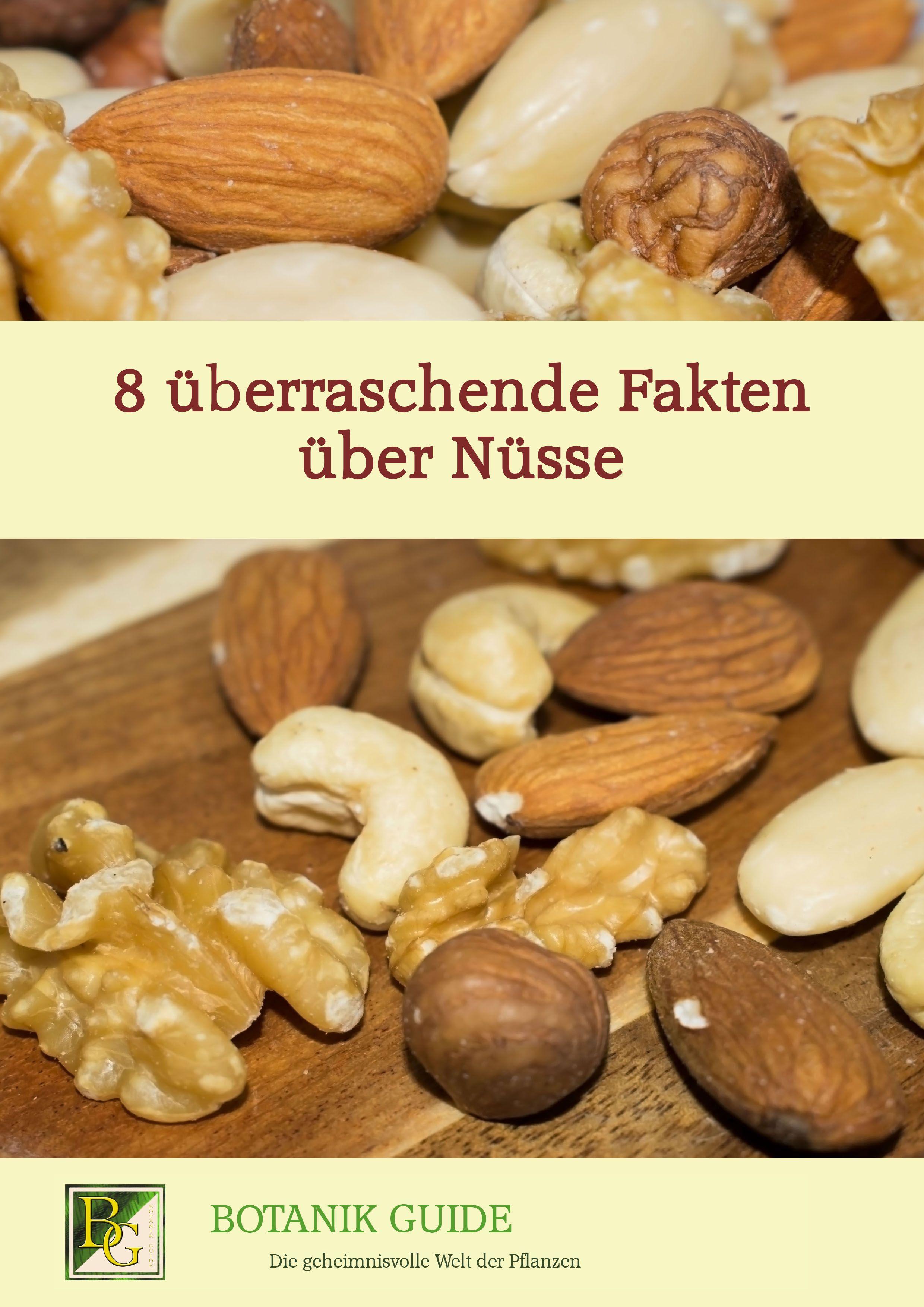 8 Uberraschende Fakten Uber Nusse Gesunde Ernahrung Pistazien Rezepte