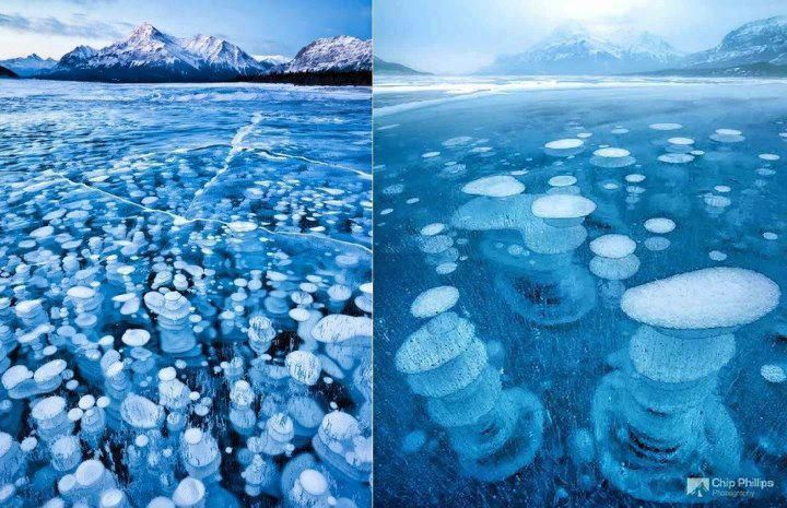 It's an amazing natural sight at Abraham lake with the Frozen bubbles under the ice