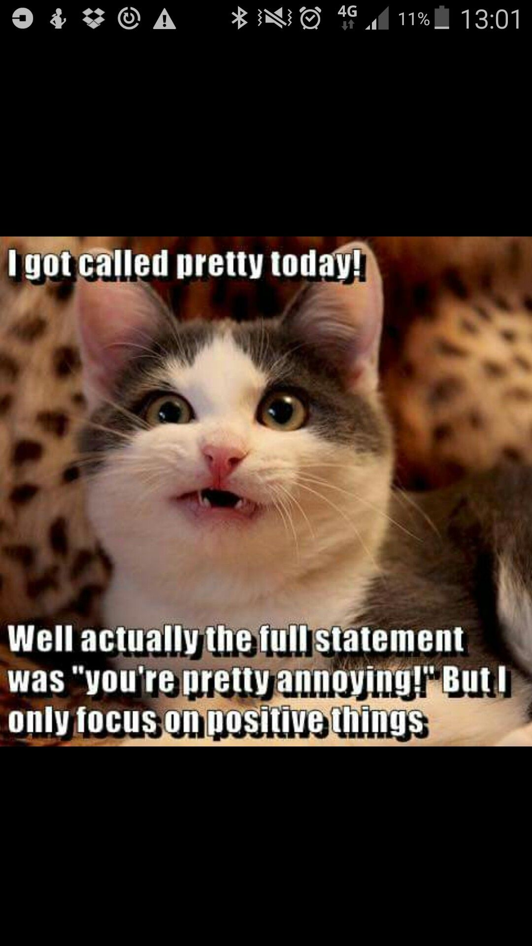 Pin by Elizabeth Butler on Cats Funny grumpy cat memes