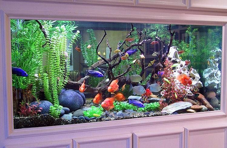 Aquarium Ideas ♥ THE Most Beautiful Fresh Water Tank Iu0027ve Ever Seen!